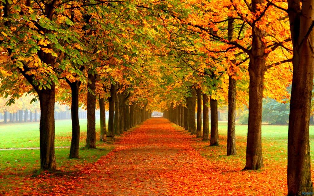 8 consejos para ahorrar en otoño gas electricidad